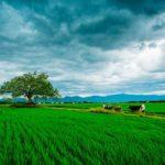 in-wheat-field-1529697_640